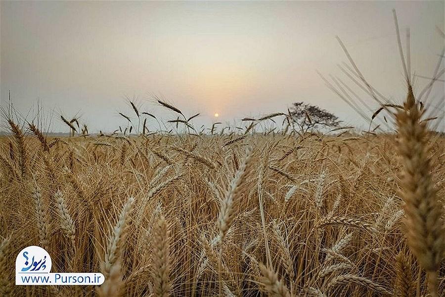 تصویر آتش زدن پسماند مزارع در استان مرکزی ۸۰ درصد کاهش یافت