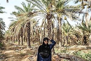 تصویر  مهد نخل های ایران چشم انتظار آب / مرگ خاموش10 درصد نخلستان های استان خوزستان