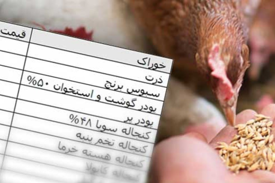 تهیه جیره غذایی در مرغداریها منجر به افزایش پرت مواد غذایی میشود
