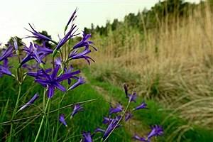 تصویر  بوستان طبیعت پردیسان ثبت ملی میشود