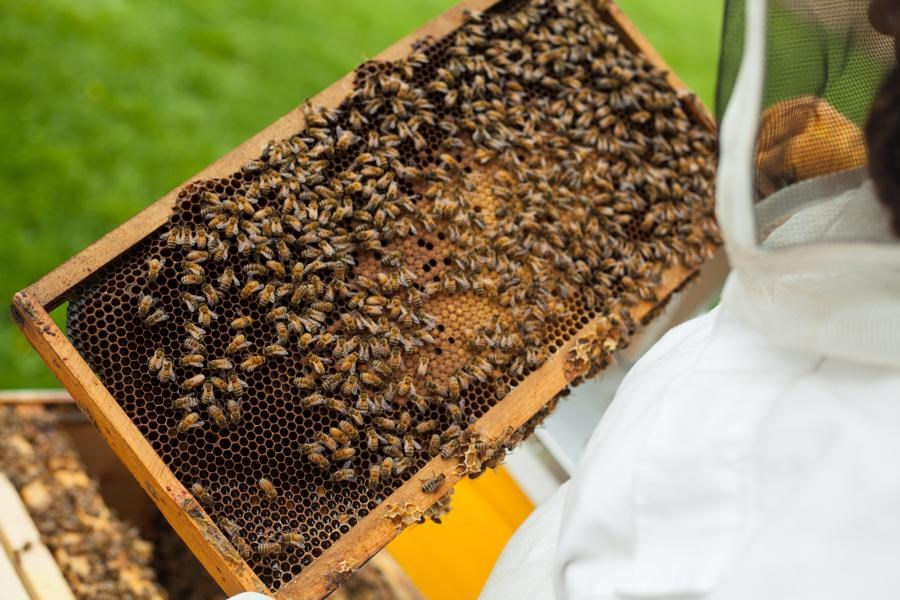 برخی دهیاران از زنبورداران برای زنبورداری پول دریافت میکنند/ نداشتن بیمه و گرانی شکر از چالش های این حرفه