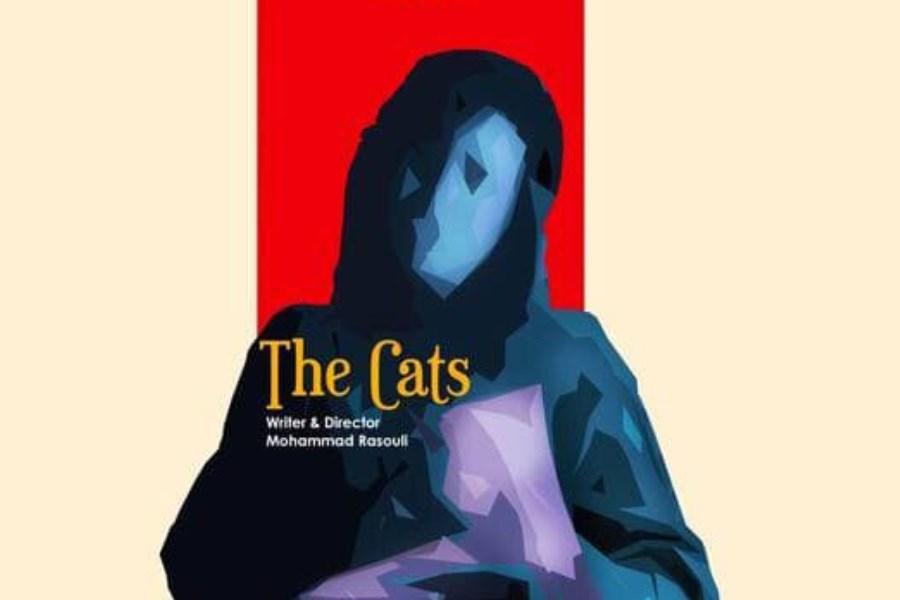 «گربهها»ی ایران به جشنواره آمریکایی می رود