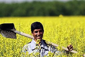 تصویر  خرید تضمینی ۱۲۶ هزار تن کلزا از کشاورزان