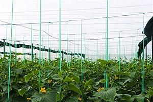 تصویر  ۳۰۵۲ هکتار انواع گلخانه در سال 1400 احداث میشود