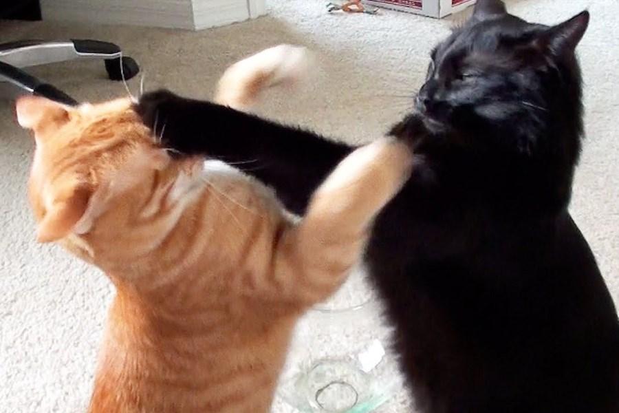 تصویر کشتی گربه ها در مسابقات المپیک+ ویدئو