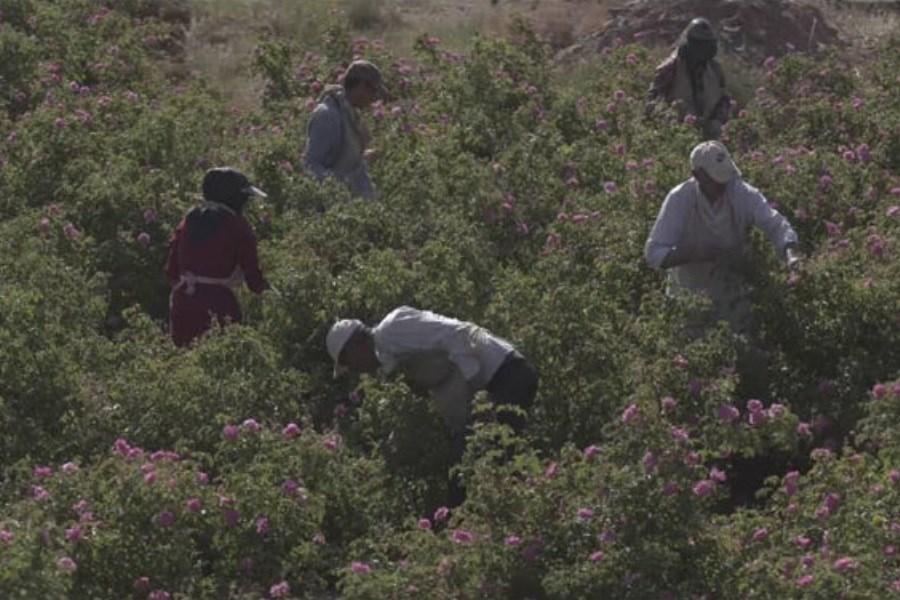 مستند ایران زاد در کاشان و اصفهان
