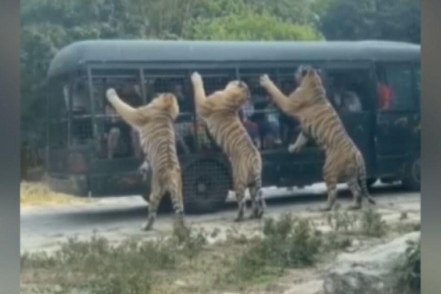 باغ وحشی برای انسانها