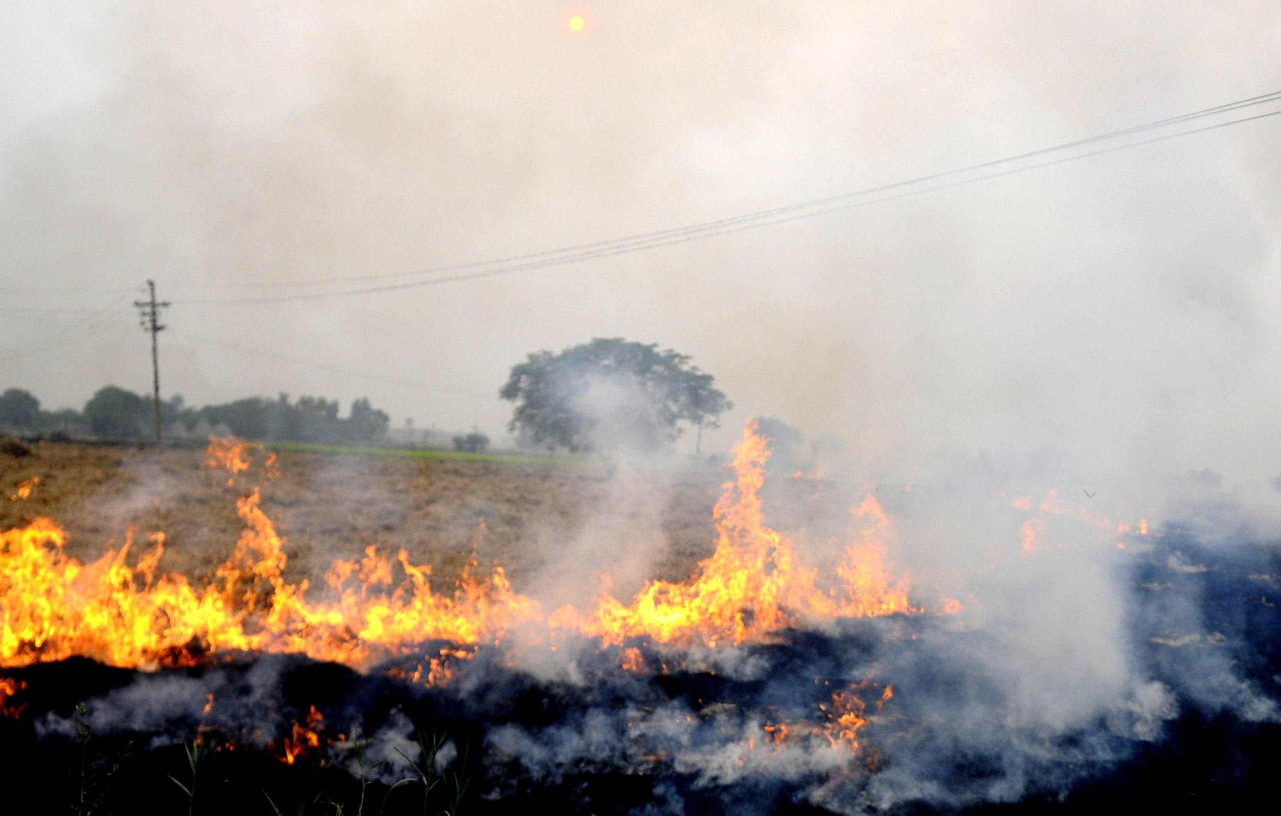 باوری غلط در آتشزدن شالیزارها پس از برداشت برنج