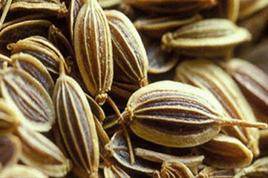 گیاهی موثر در کاهش وزن و چربی خون