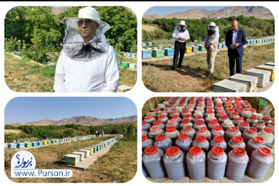 یکی از اولویت های  جهاد کشاورزی لرستان، برندسازی عسل است