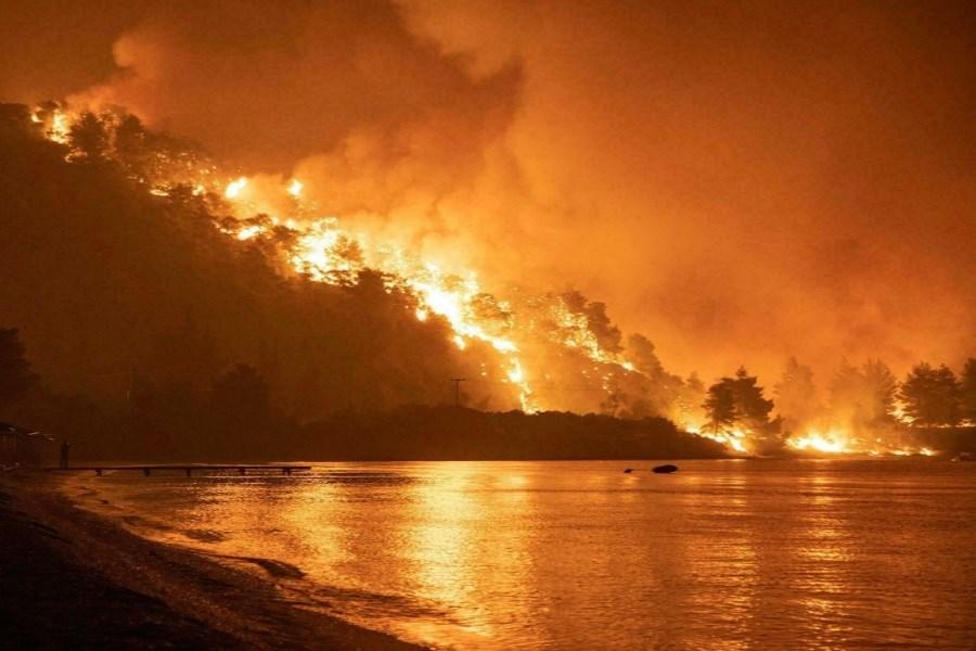 آتش سوزی جنگلها فاجعه زیست محیطی بود
