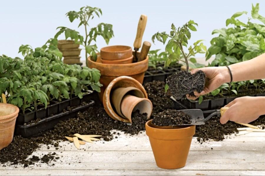 زمان مناسب و روش تعویض خاک گدان در خانه
