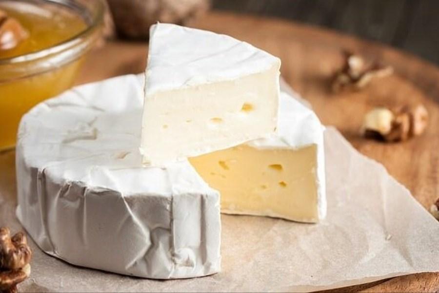 پنیر 38 درصد گران شد/  افزایش ۲۰۰ درصدی قیمت سویا