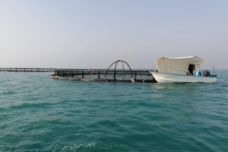 تخصیص 150 میلیارد ریال منابع بانک کشاورزی برای راه اندازی پرورش ماهی