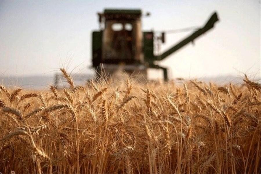 عملکرد موفق بانک کشاورزی در واریز کلیه وجوه گندم تا نیمه شهریور