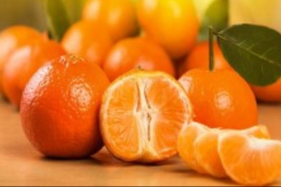 جریان برداشت نارنگیهای نارس در مازندران