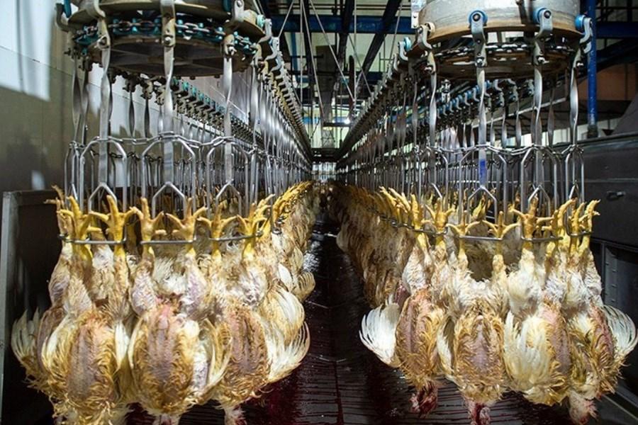 پیشبینی کاهش قیمت مرغ در مهر ماه