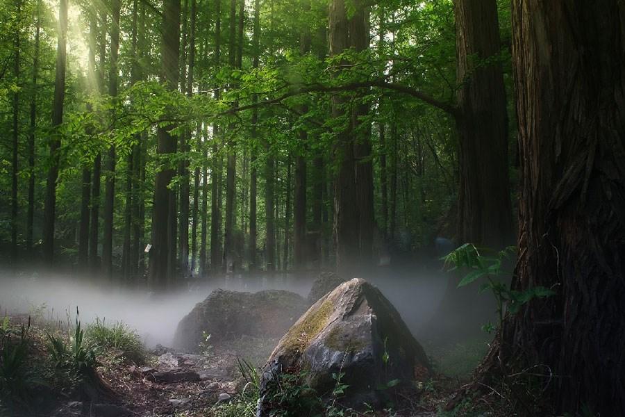 چند نکته درباره جنگلهای ایران