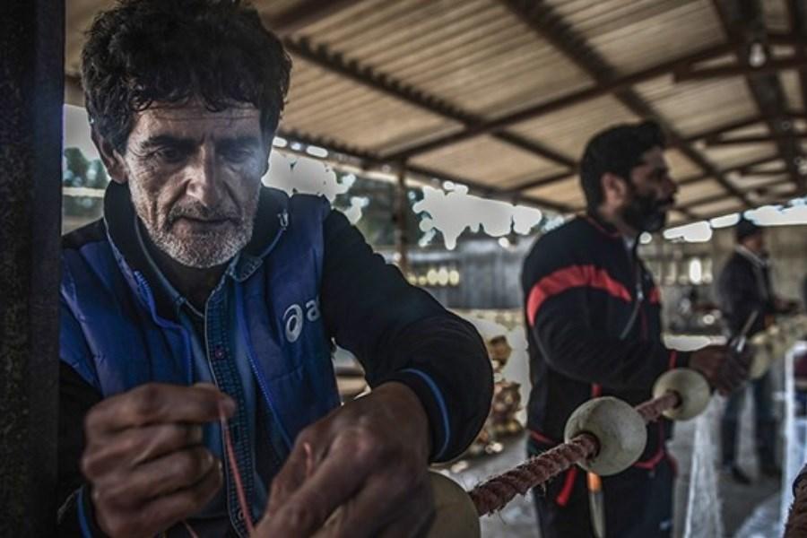 درخواست حفاظت از جانداران دریای مازندران