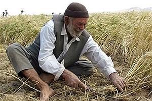 تصویر  نقش الگوی کشت در کاهش ضایعات و رونق اقتصاد کشاورزی