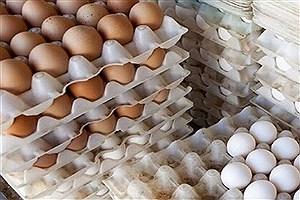 تصویر  ۱۰۰ درصد تخم مرغ مورد نیاز از سایر استانها تأمین میشود