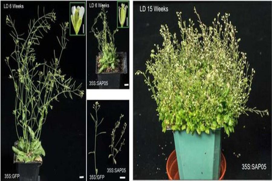 """تصویر تبدیل گیاهان به """"زامبی""""  با این باکتری!"""
