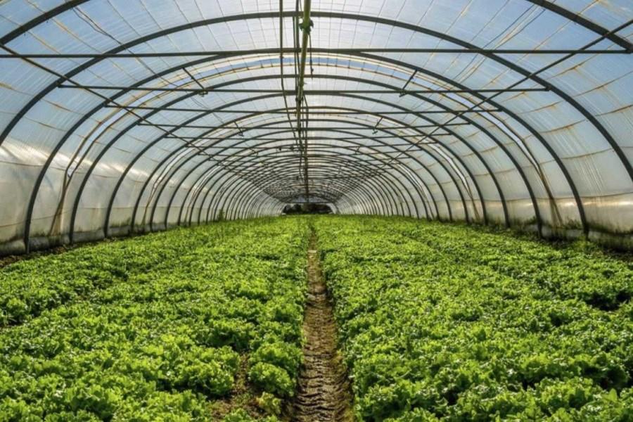 170 میلیون تومان سرمایه؛ برای گلخانه نیاز است/چه نکاتی در گلخانهداری مهم است؟
