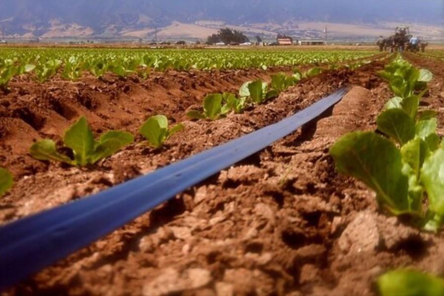 تصویر صرفهجویی ۴۰ درصدی در مصرف آب با آبیاری نوین