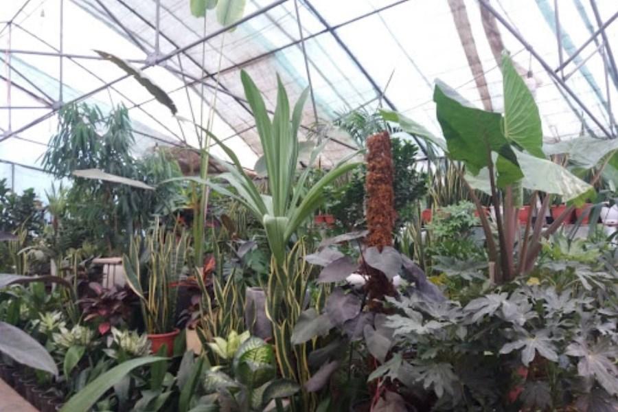تصویر وام به تولیدکنندههای گل و گیاه اعطا نمیشود