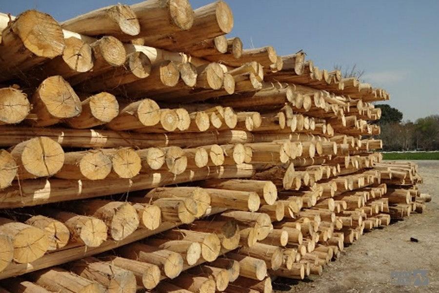 عدم صدور مجوز قطع درختان در حریم رودخانهها