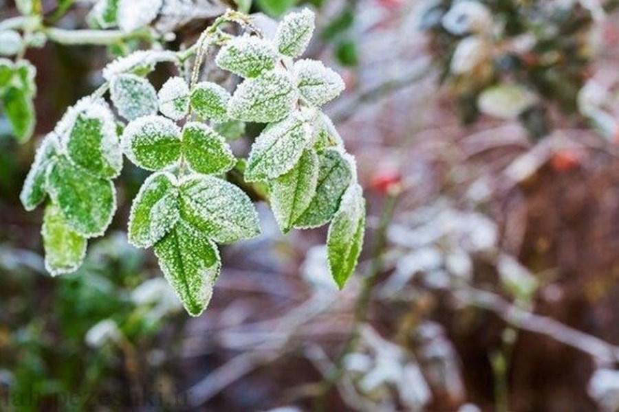 کاهش 10 درجهای دمای هوا و بیم سرمازدگی محصولات کشاورزی در پاییز