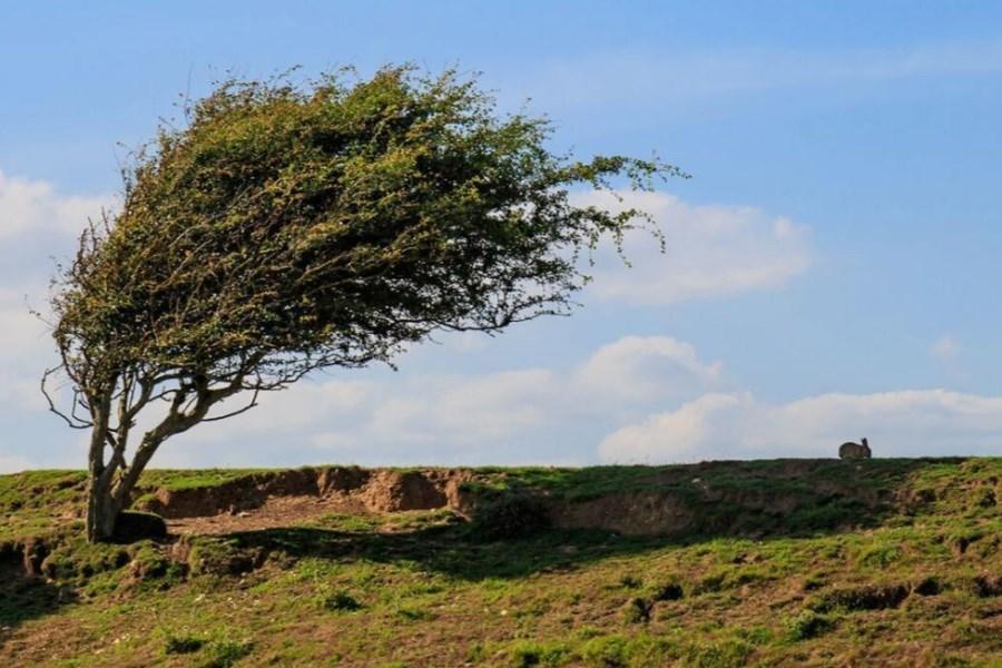 فردا شدت و میزان سرعت وزش باد افزایش مییابد