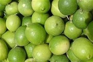 تصویر  برداشت ۸ هزار تن لیمو ترش طی امسال