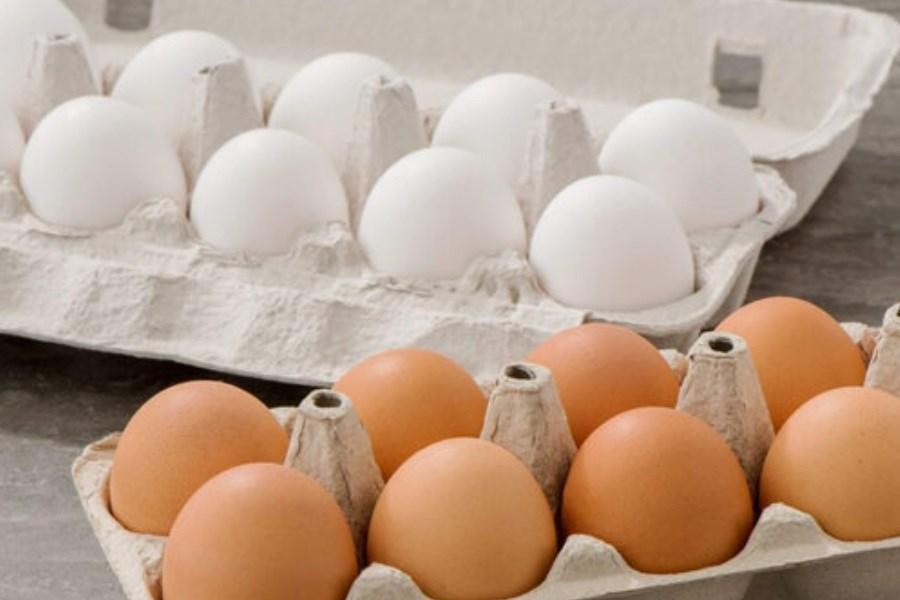 مرغداران به دنبال نرخ جدید تخم مرغ هستند