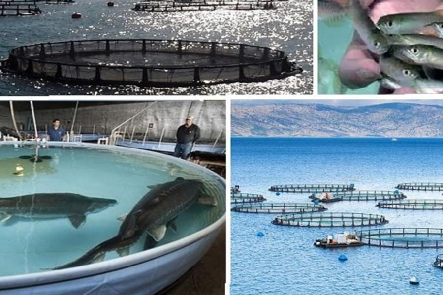 تصویر اختصاص۱۰۰ میلیارد تومان برای توسعه مزارع پرورش ماهی