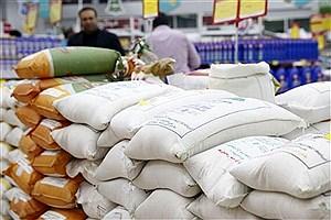 تصویر  برداشت برنج در سطح ۱۰۰ هکتار از اراضی آغاز شد