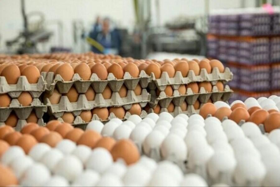 عرضه گسترده تخم مرغ با قیمت مصوب از امروز