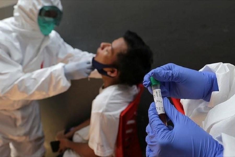 239 میلیون نفر مبتلا به کرونا در جهان