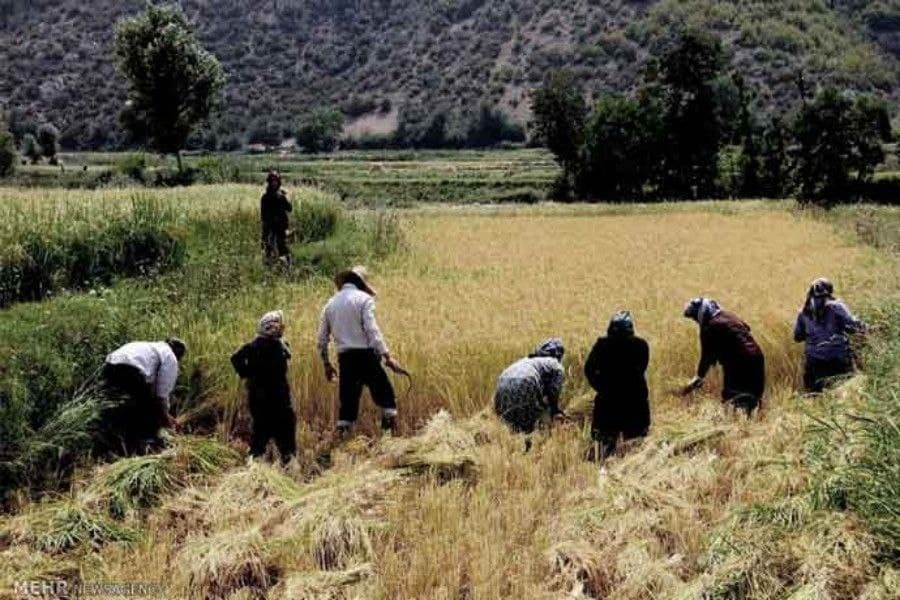 اجرای طرح ملی بیمه رایگان دهکهای کمدرآمد در استان/ 31 هزار نفر از روستاییان تحت پوشش بیمه رایگان قرار میگیرند