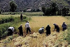 تصویر  اجرای طرح ملی بیمه رایگان دهکهای کمدرآمد در استان/ 31 هزار نفر از روستاییان تحت پوشش بیمه رایگان قرار میگیرند