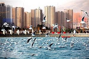 تصویر  طرح هدایت و کنترل توسعه مجموعه گردشگری دریاچه خلیج فارس ابلاغ شد